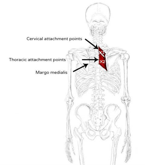 rhomboid pain trigger points