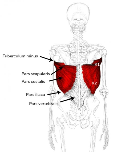 Latissimus Dorsi Muscle Pain Trigger Points