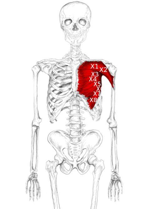 Pectoralis major muscle pain & trigger points